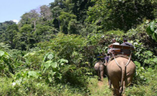chitwan jungle safari tour