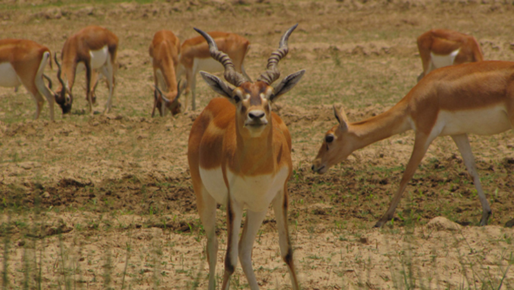 Bardia safari tour packages and cost